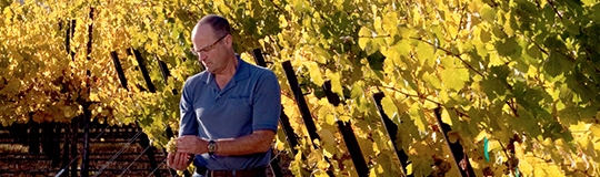 Winemaking bob bertheau 1